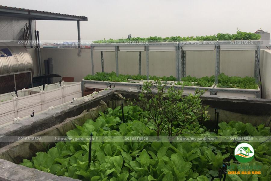 Vuon-rau-sach-tren-san-thuong-nha-chi-Nhung-Trinh-Cong-Son-Mygarden.vn-0916818526-hinh-1