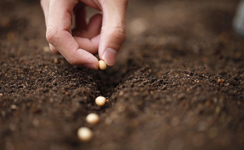 Cách bảo quản hạt giống rau trồng