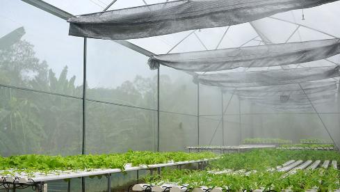Hệ thống phun sương cho trồng rau sạch quy mô công nghiệp