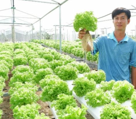 Kinh nghiệm trồng rau sạch xuất nhập khẩu