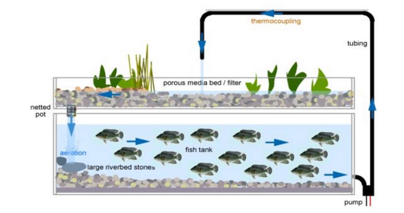 Mô hình nuôi cá trồng rau sạch tưới ngập và xả cạn