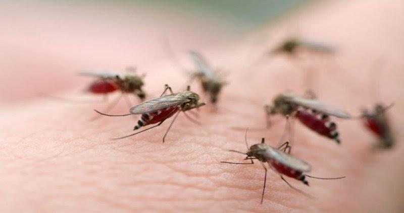 Các bệnh về muỗi và côn trùng gây ra