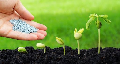 Sử dụng liều lượng phù hợp đối với mỗi loại cây trồng