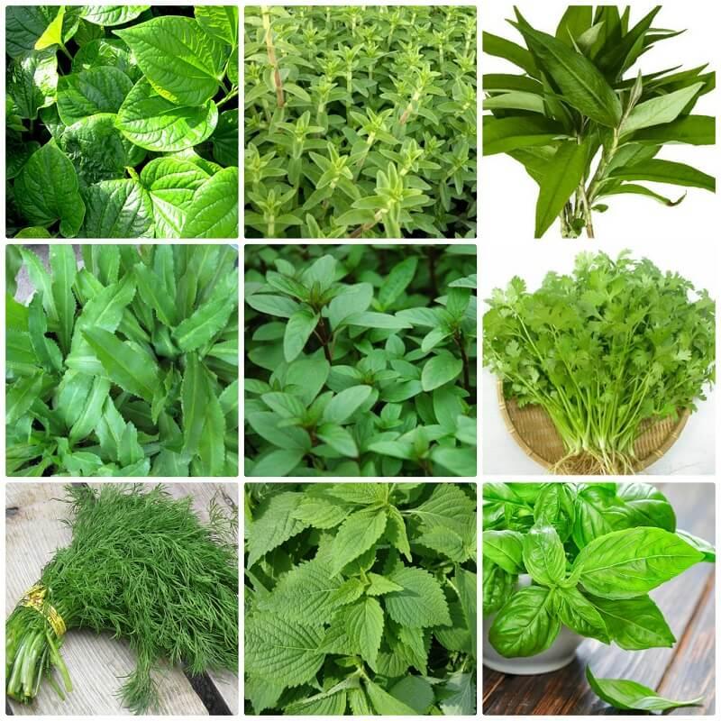 Rau thơm là gia vị đặc biệt quan trọng trong các món ăn Việt Nam
