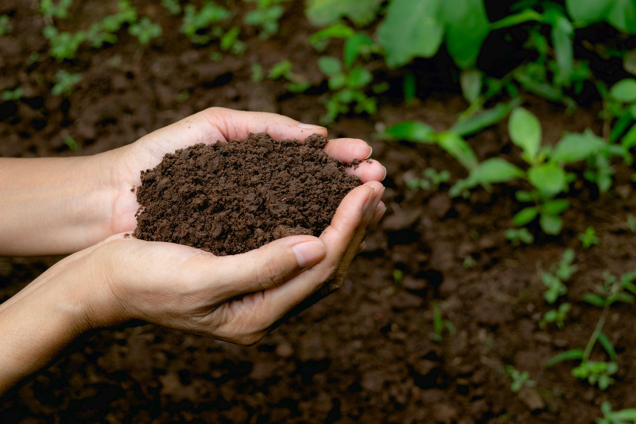 Bón phân vi sinh vào đất giống như một vị cứu tinh, giúp cung cấp các dinh dưỡng cho đất