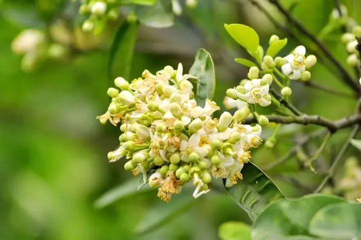 Cây trồng sau khi sử dụng phân bón tạo mầm hoa