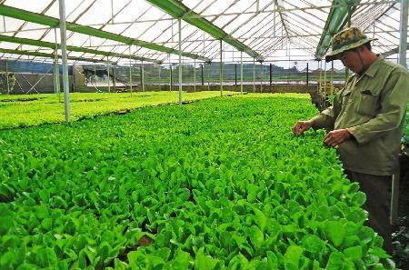 Chăm sóc hạt giống cây trồng