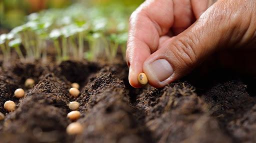 Hạt giống online uy tín đảm bảo cây con phát triển khoẻ mạnh