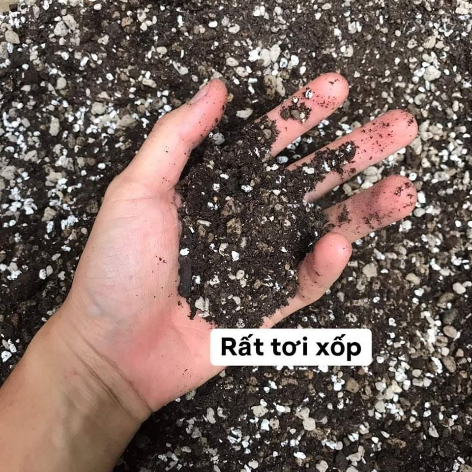 Đất trồng sen đá soil mix