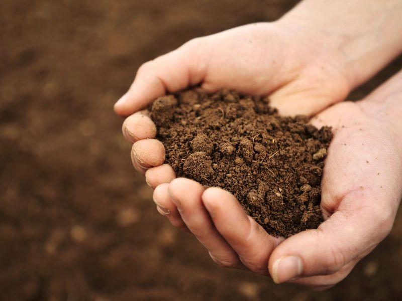 Chọn loại đất ươm tơi mịn, xốp, thoáng khí và thoát nước tốt