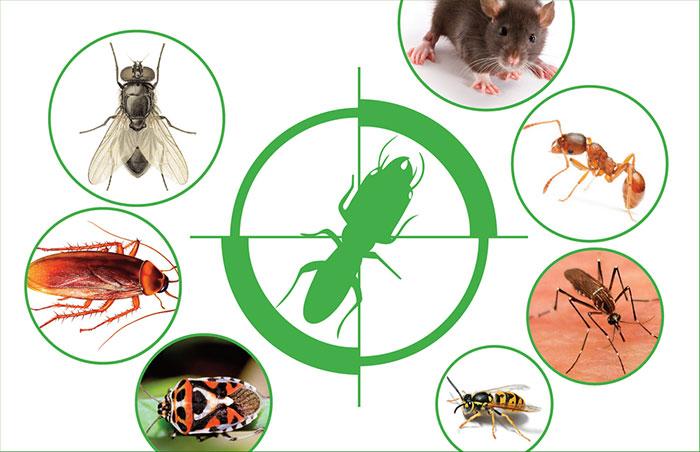 Mua thuốc diệt côn trùng ở đâu giá tốt, hiệu quả