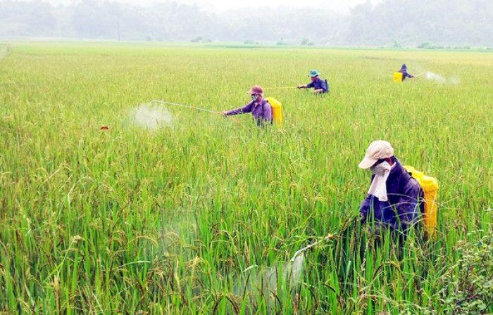 Lưu ý khi phun thuốc trừ sâu lân hữu cơ