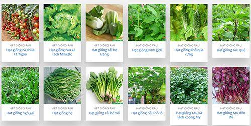 Một số loại hạt giống rau phổ biến