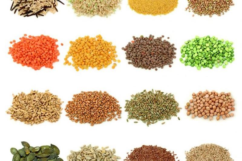 Lựa chọn mua hạt giống cây trồng