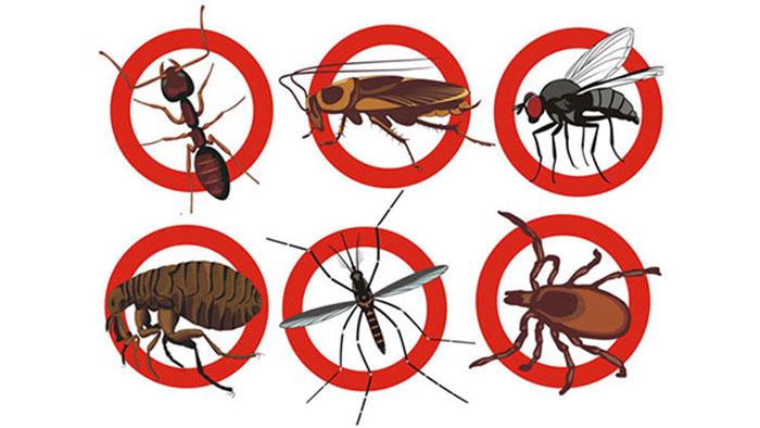Mua thuốc diệt côn trùng ở đâu giá tốt
