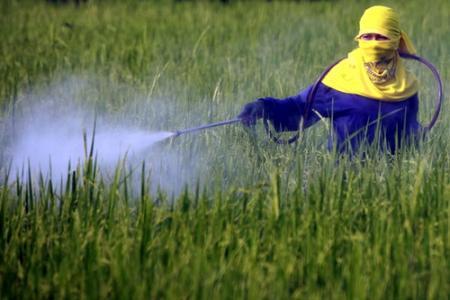 Người nông dân đang phun thuốc trừ sâu nhóm lân hữu cơ