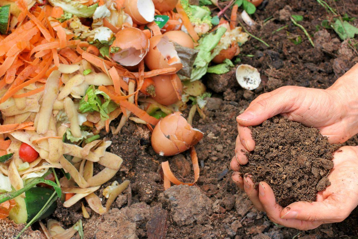 Phân bón hữu cơ cho rau