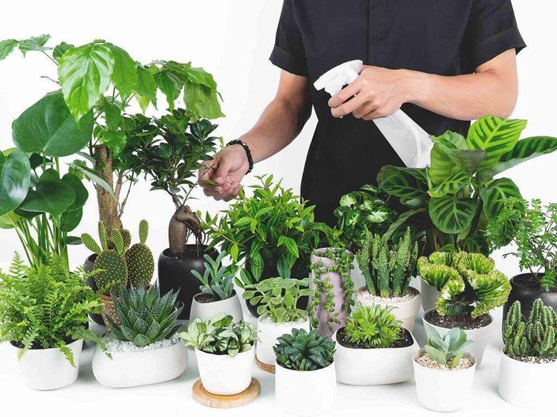 Hiệu suất cây sử dụng các chất dinh dưỡng qua lá đạt tới 95%