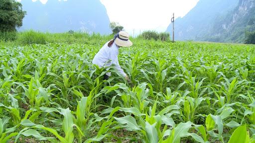 Cung cấp và bổ sung đầy đủ các chất dinh dưỡng hỗ trợ sự phát triển của cây cảnh