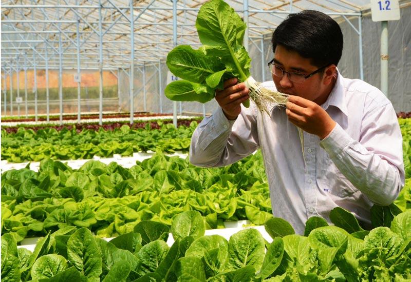 Chọn đất trồng rau chuẩn VietGap là yếu tố cần quan tâm