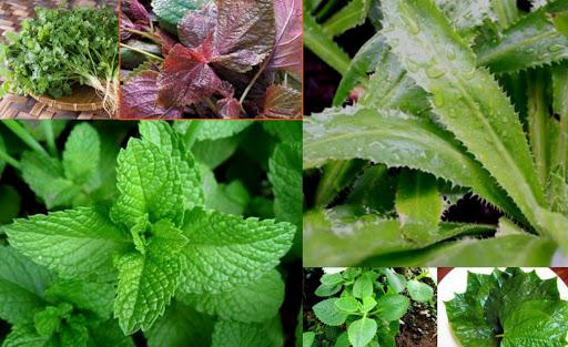 Một số loại rau thơm còn có tác dụng chữa một số bệnh lý