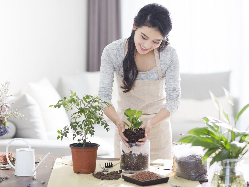 Sử dụng phân bón hữu cơ cho cây cảnh mang lại nhiều lợi ích