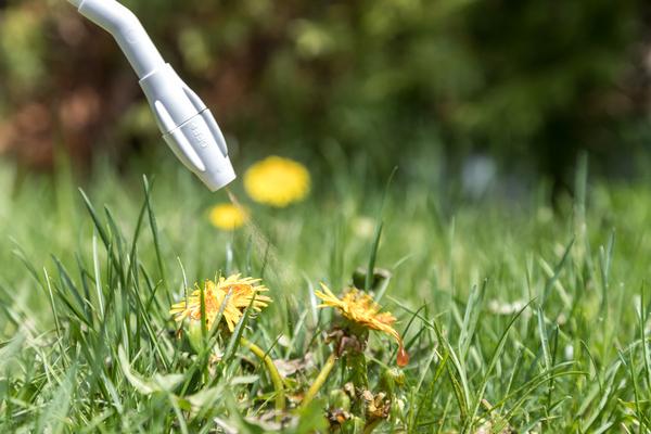Thuốc trừ cỏ sinh học không làm hại đến cây trồng và thân thiện với môi trường