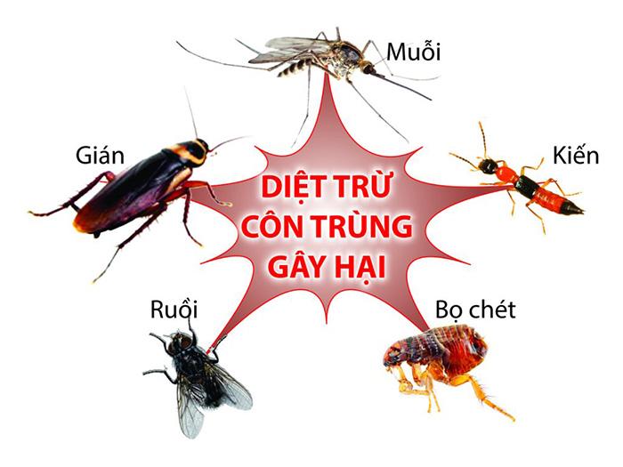 thuốc diệt côn trùng hiệu quả