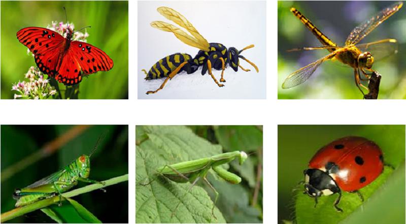 Thuốc diệt côn trùng hiệu quả, an toàn cho người sử dụng