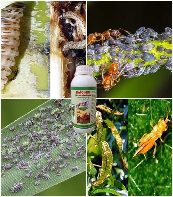 thuốc trừ sâu thảo mộc