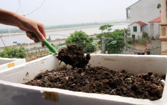 cách trồng ămng tây tại nhà