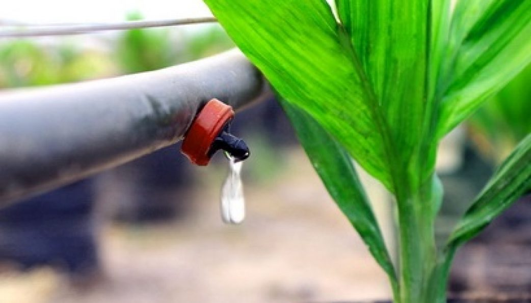 Sử dụng hệ thống tưới nhỏ giọt Israel giúp tiết kiệm tới 50% nước