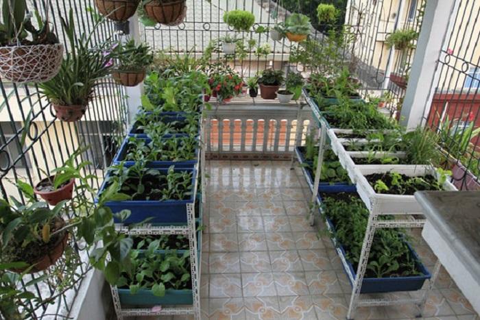 trồng rau dưới mái tôn 2