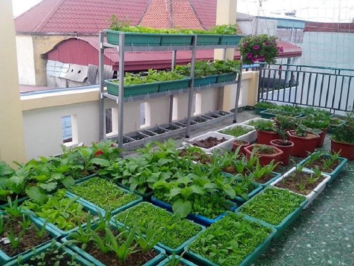 cách trồng rau dưới mái tôn hiệu quả